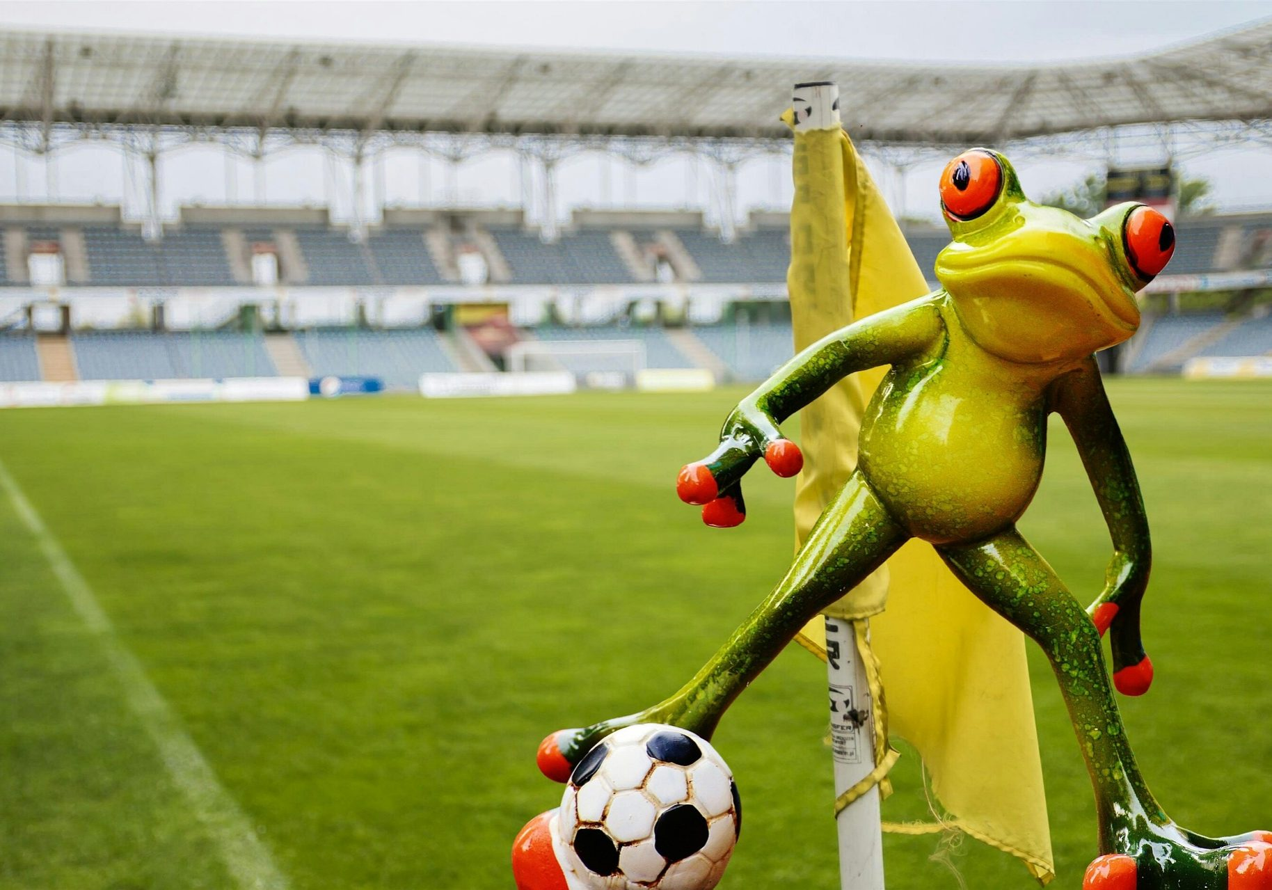 Frog stadium